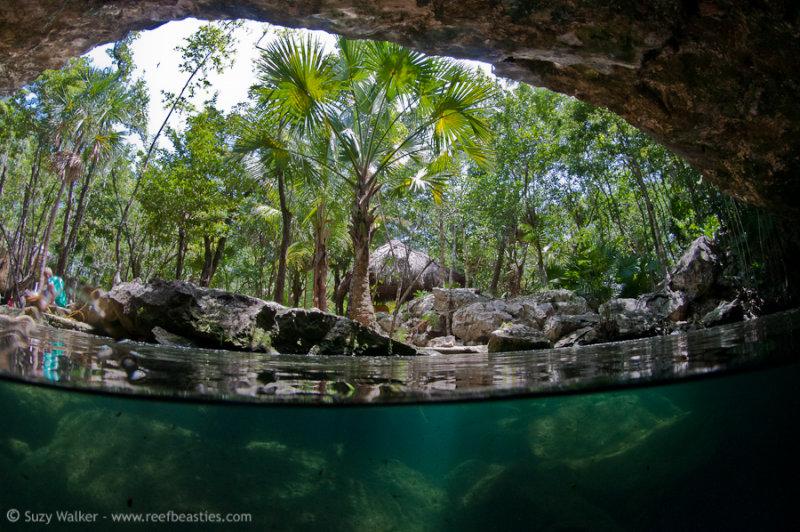 Chac Mool Cenote split level