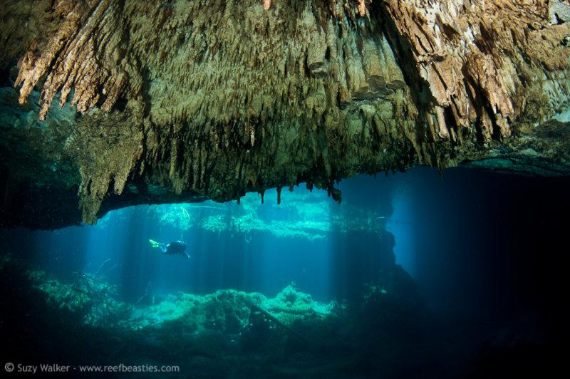 Eden Cenote stalactites