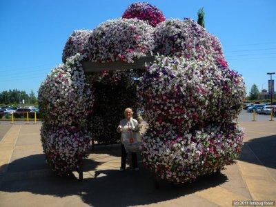 Carol In Floral Cage