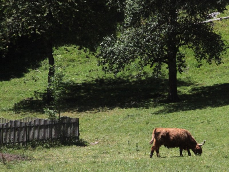 hmmm... Highland cattle in Slovenia?