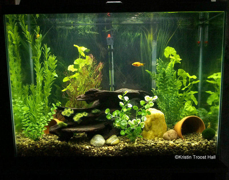 new fish tank after