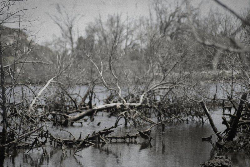 Wetlands0082