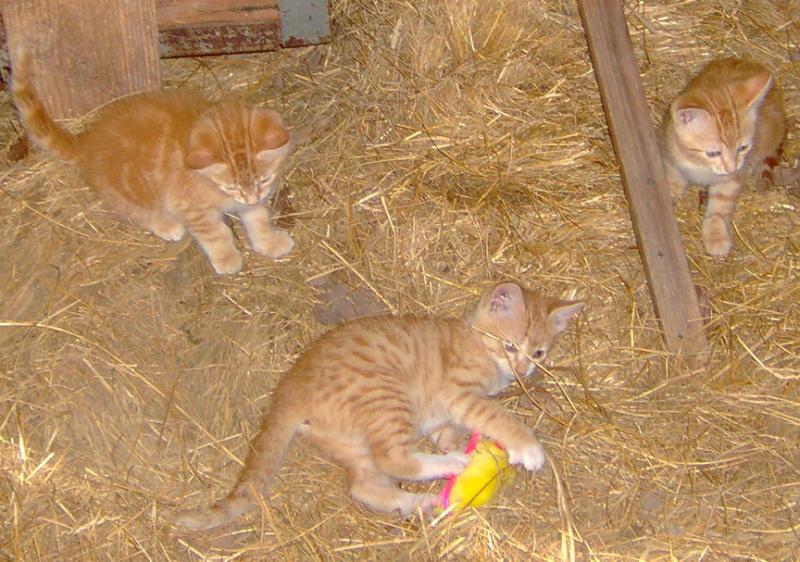 Kitties 002.jpg