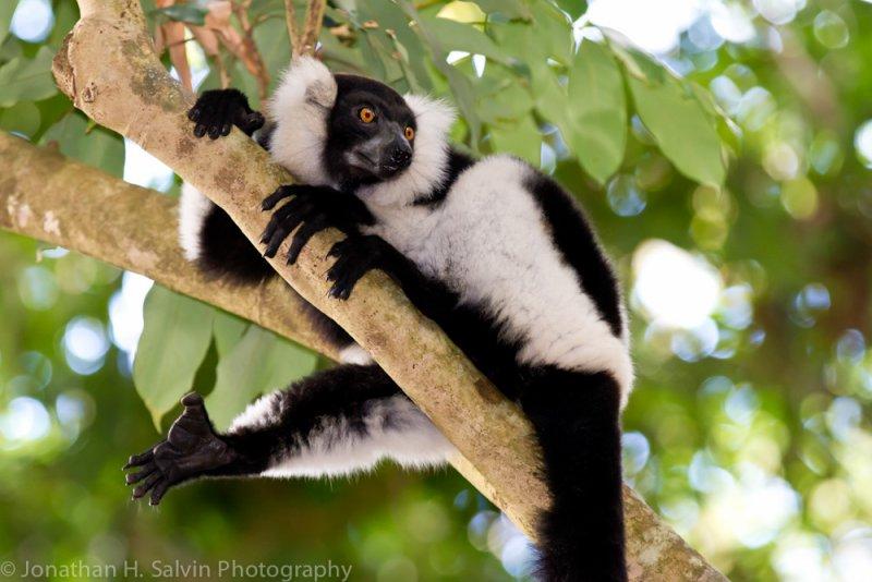 Madagascar-979.jpg