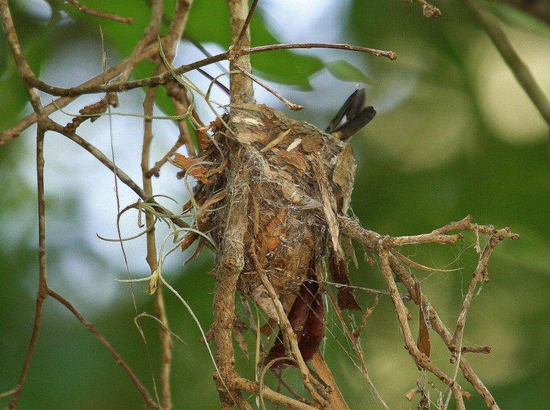 Nest Close up