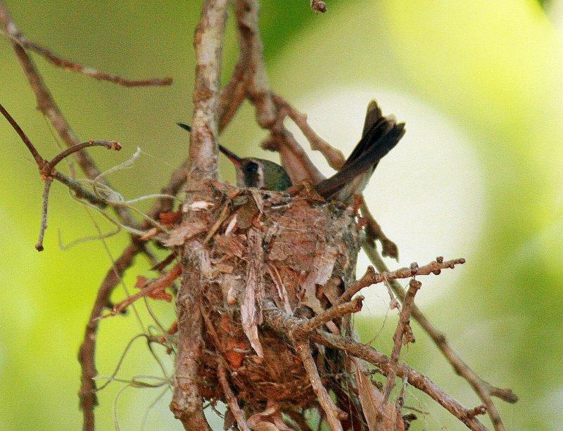Bird on Nest 1