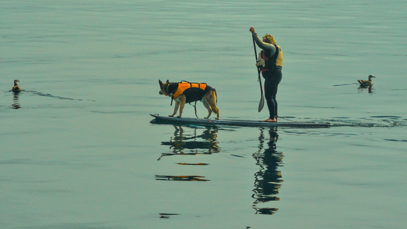 Floating the dog, Monterey, California, 2012