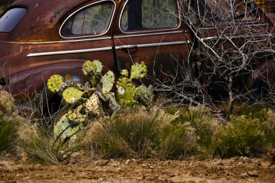 Cactus bound, Cordes Junction, Arizona, 2011