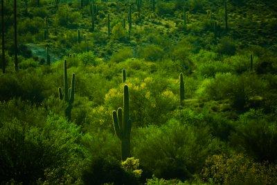 Rim light, Goldfield, Arizona, 2011