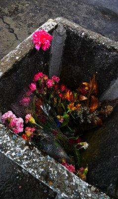 Discarded flowers, Cuenca Cemetery, Cuenca, Ecuador, 2011