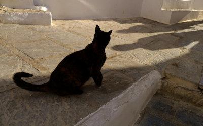 Stalker, Lindos, Rhodes, Greece, 2011