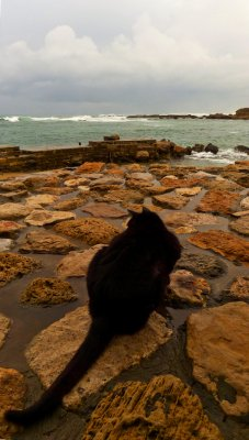 A cat's tale, Caesarea, Israel, 2011