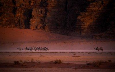 Camels at dusk, Wadi Rum, Jordan, 2011