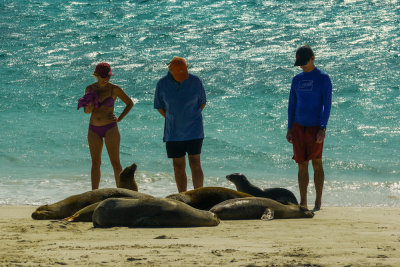 Tourists and Sea Lions, Gardner Bay, Espanola Island, The Galapagos, Ecuador, 2012