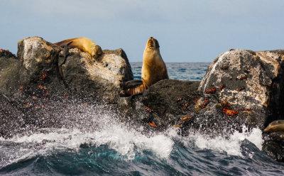 Rocks, spray, sea lions, and crabs off Santa Fe Island, The Galapagos, Ecuador, 2012