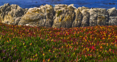 Wildflowers, Carmel, California, 2012