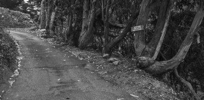 Driveway, Wildcat Hill, Carmel Highlands, California, 2012