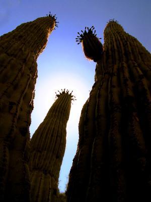 Giants, Phoenix, Arizona, 2003