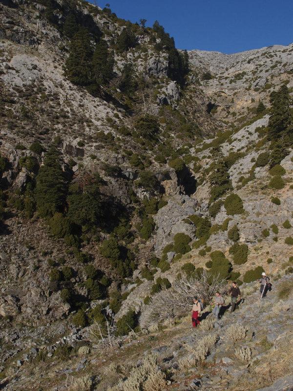 CIRCULAR AL TORRECILLA: Pto Corona - Paso del Cristiano - Pilar de Tolox - Los Oreganeros 133321903