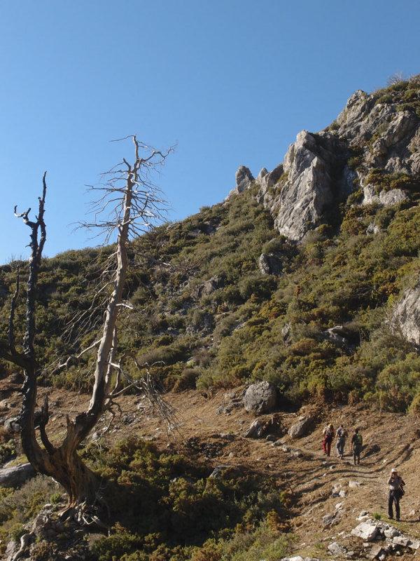 CIRCULAR AL TORRECILLA: Pto Corona - Paso del Cristiano - Pilar de Tolox - Los Oreganeros 133321904