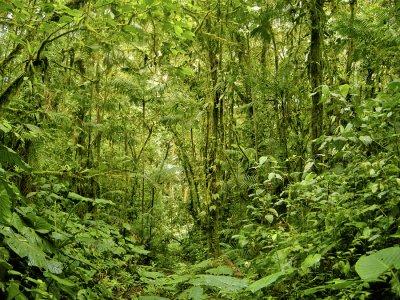 Tandayapa Cloudforest (Ecuador)