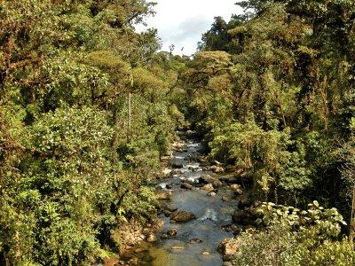 Where Treerunners roam...(ECUADOR)
