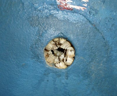 Cause = Barnacle Colony