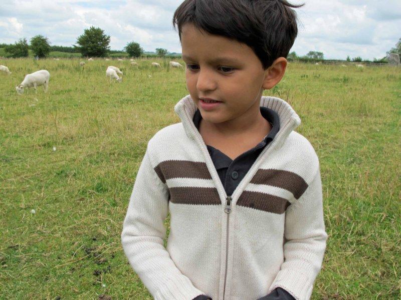 Investigating a flock among the Avebury henge