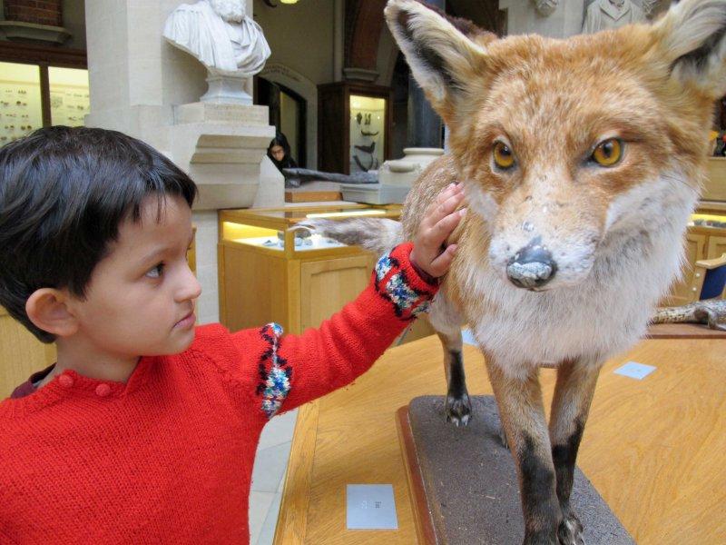 Fellow Fox