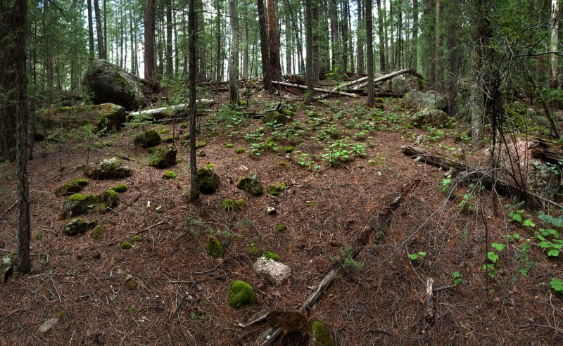 Find the Forest Fairies