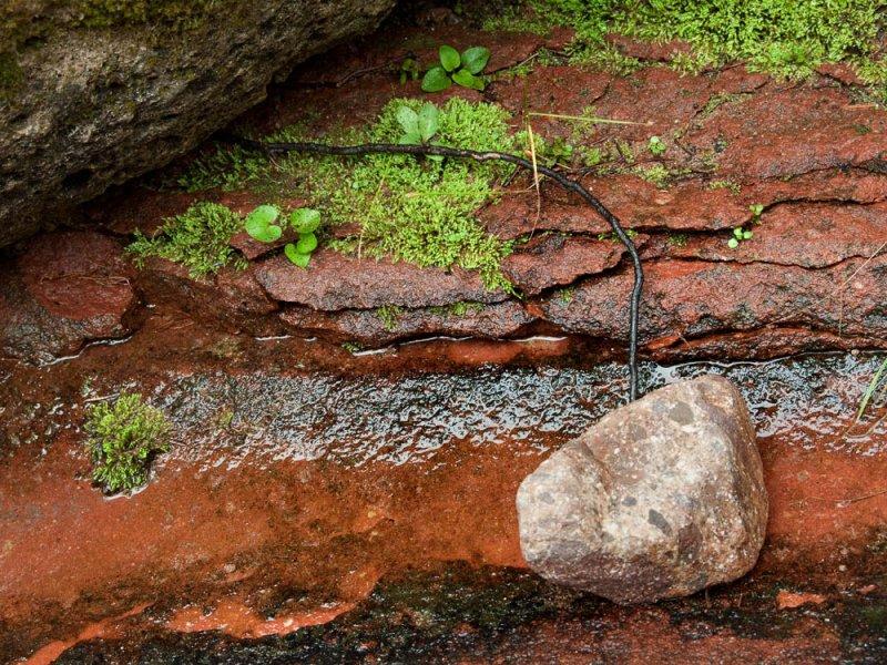 Root & Rock