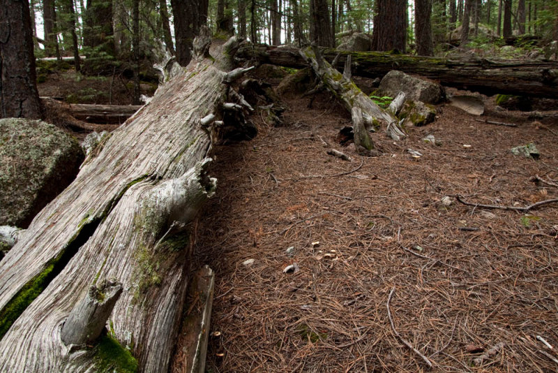 Forest Logs