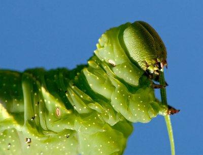 2008 Caterpillar