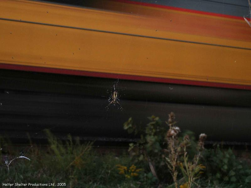 The Spider and the Train.jpg