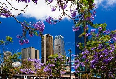 Sydneys CBD with jacaranda foreground