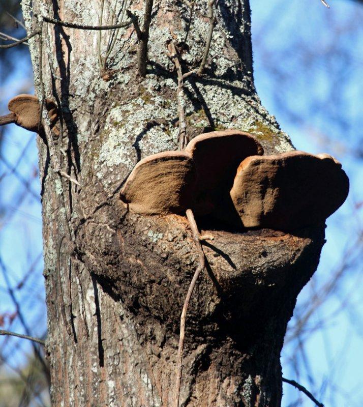 Fungi around tree hole