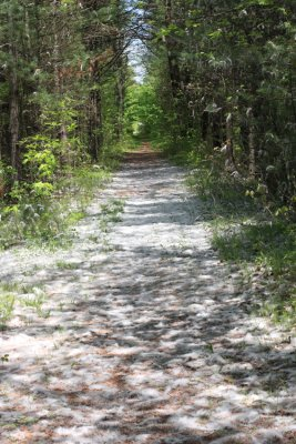 Snow on the trail, not quite