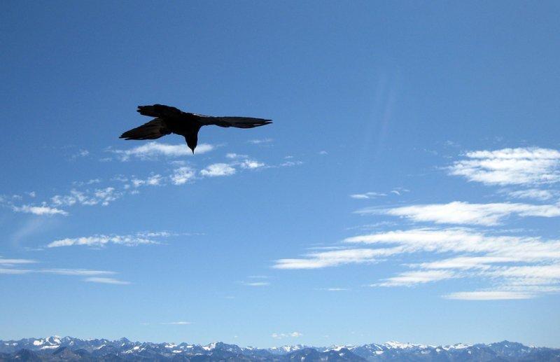 Chough surveys Zugspitze