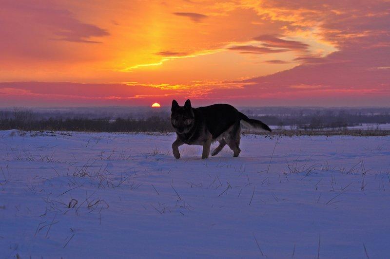 Paco at Sunset