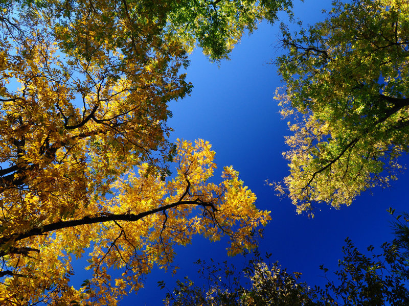 Fall Color Sampler (2011)