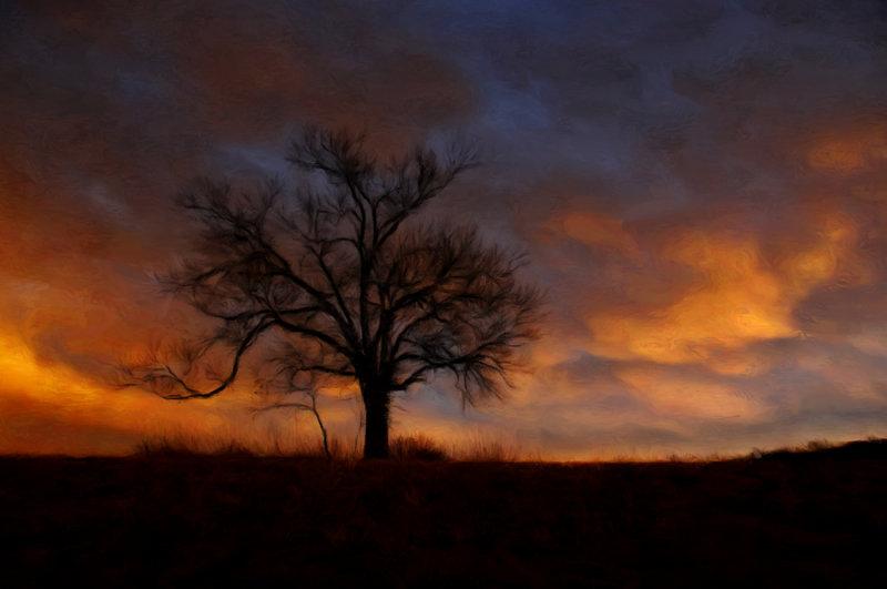 Rainbow Tree at Elam Bend