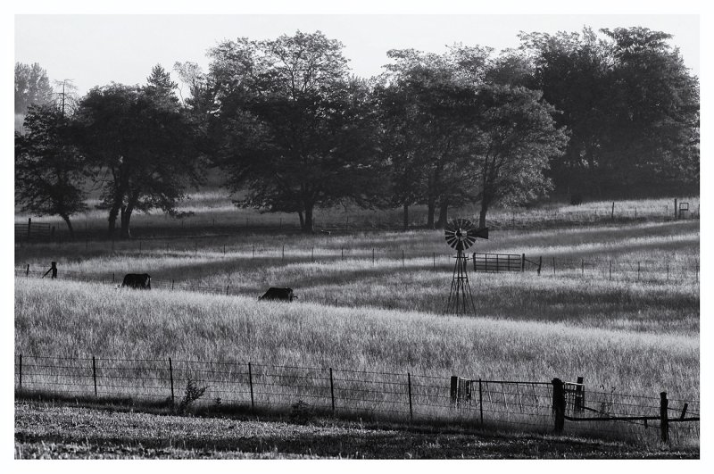Morning Mist (B&W)