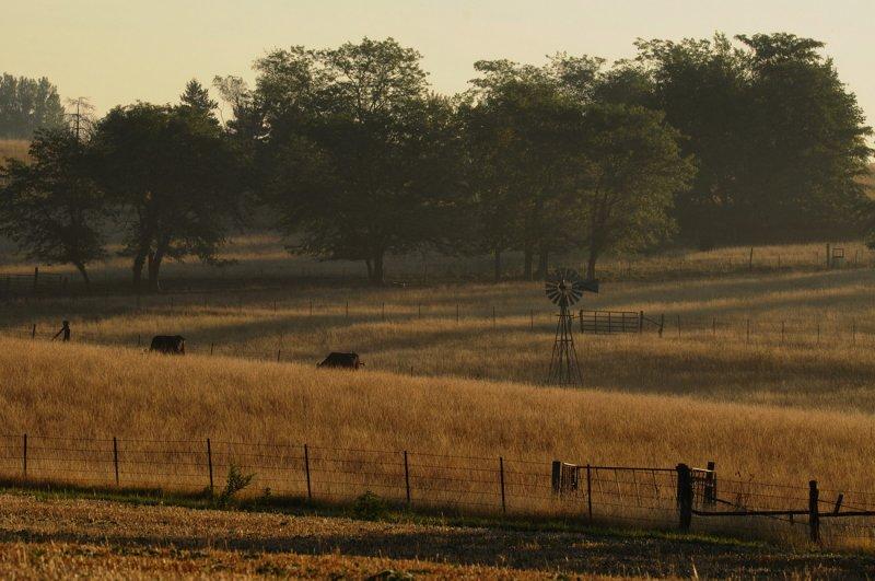 Morning Mist in Missouri (Color)