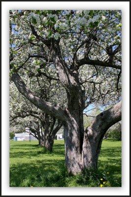 Je suis amoureux des arbres..