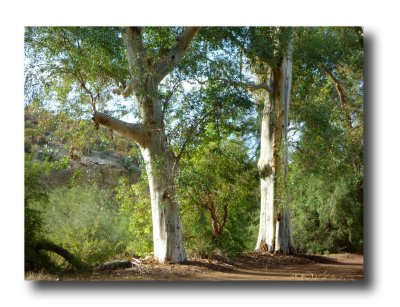 Fragrance of Eucalyptus