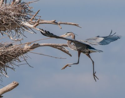 A Variety of Birds From the Salton Sea