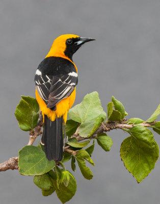 Some birds From My Backyard