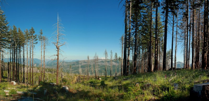 Kalmiopsis Wilderness Area Panorama