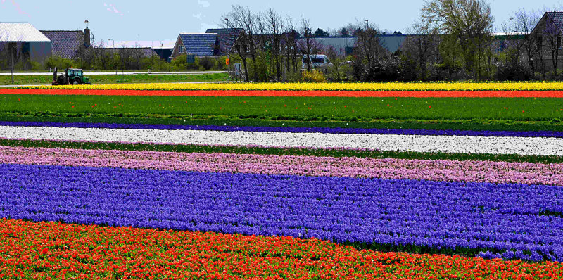 Flower growing region, South Holland