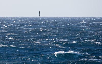 Albatros-in-Strong-Winds.jpg
